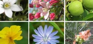 online-sc-bach-flowers-thumbnail